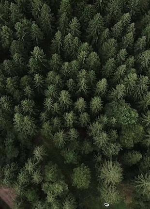 Coverr wood 1568650087945